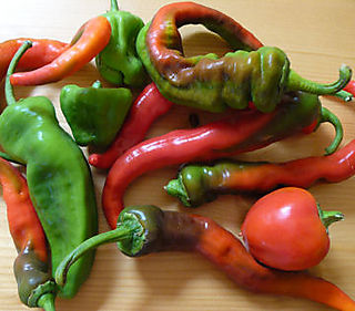 Chiles-assortment
