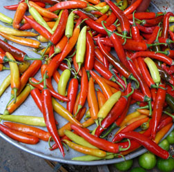 Fresh_chiles_vietnam_2